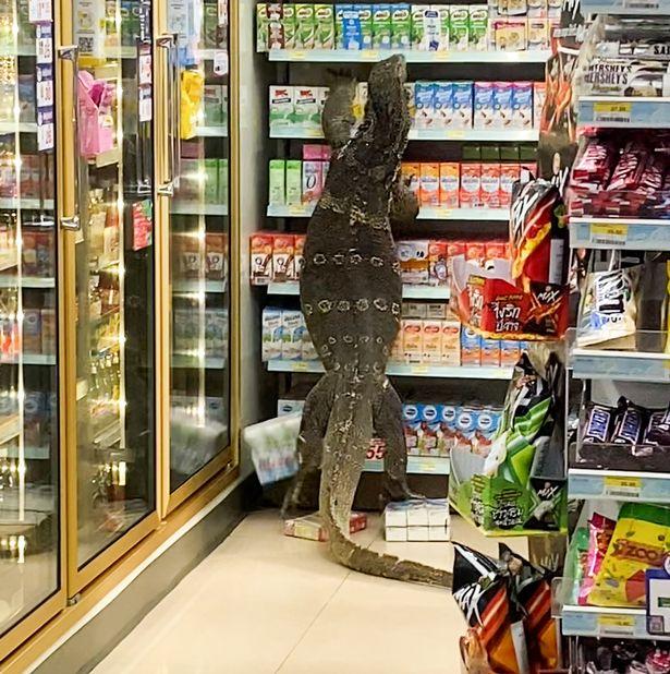 タイのコンビニにオオトカゲが現れる